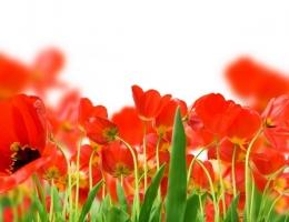 Фотопечать на рольшторах - Цветы_680