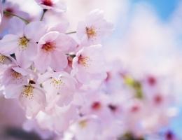 Фотопечать на рольшторах - Цветы_683