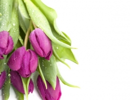 Фотопечать на рольшторах - Цветы_686