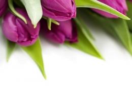 Фотопечать на рольшторах - Цветы_687