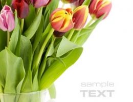 Фотопечать на рольшторах - Цветы_688